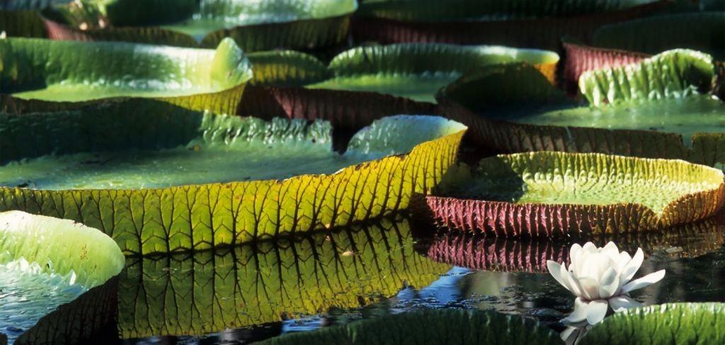 باغ گیاهشناسی موریس