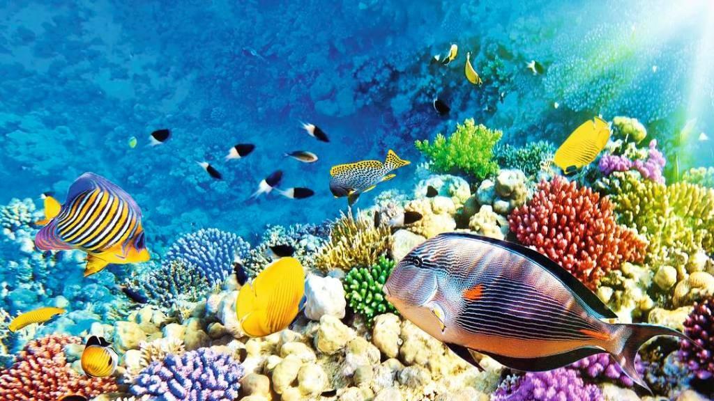 بزرگترین دیوار زنده مرجانی در موریس
