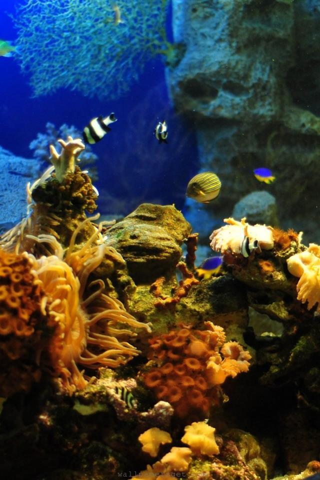 Photo of آکواریوم سوچی| پارک اقیانوسی دیسکاوری ورلد| Aqua park Sochi
