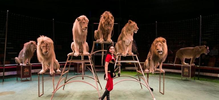 سیرک سوچی | Sochi Circus