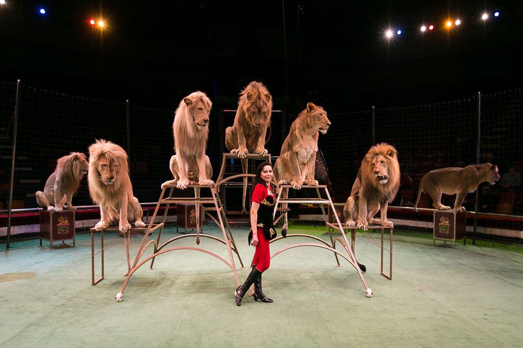 Photo of سیرک سوچی | Sochi Circus