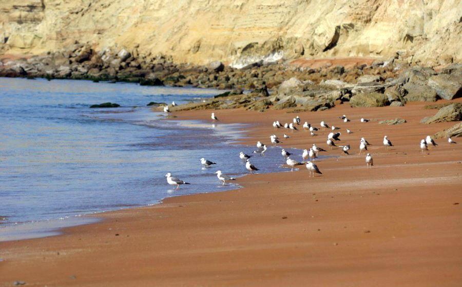 ساحل ماسه های طلایی چابهار