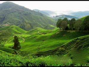 طبیعت مالزی
