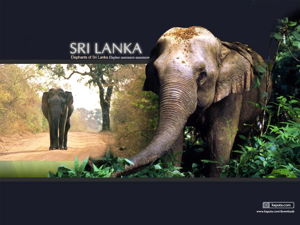 تور سریلانکا نوروز ۹۵