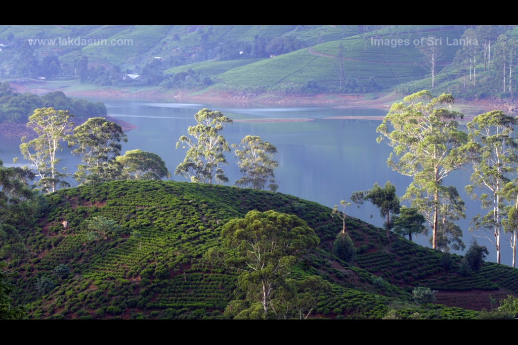 کندی سریلانکا