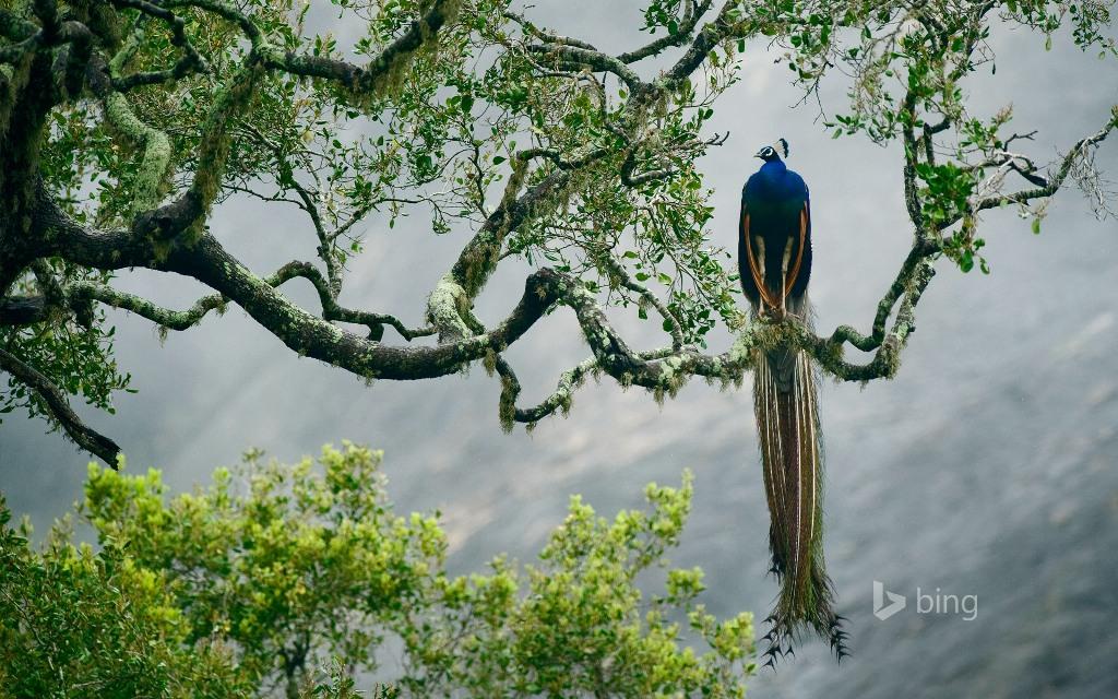 طبیعتگردی در سریلانکا
