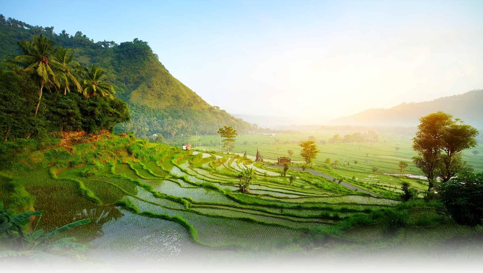 طبیعت بالی