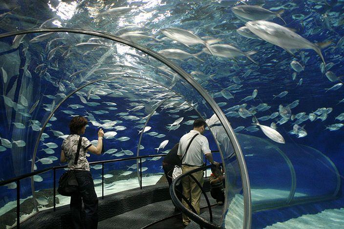Photo of آکواریوم اقیانوس شانگهای | Shanghai Ocean Aquarium