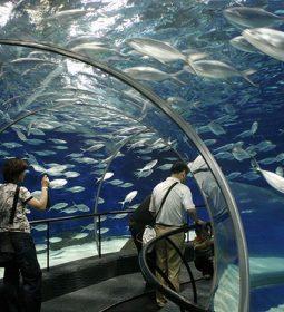 آکواریوم اقیانوس شانگهای