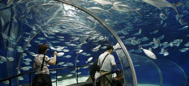 آکواریوم اقیانوس شانگهای | Shanghai Ocean Aquarium