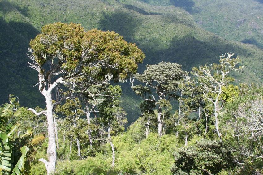 منطقه حفاظت شده بلک ریور جورج موریس