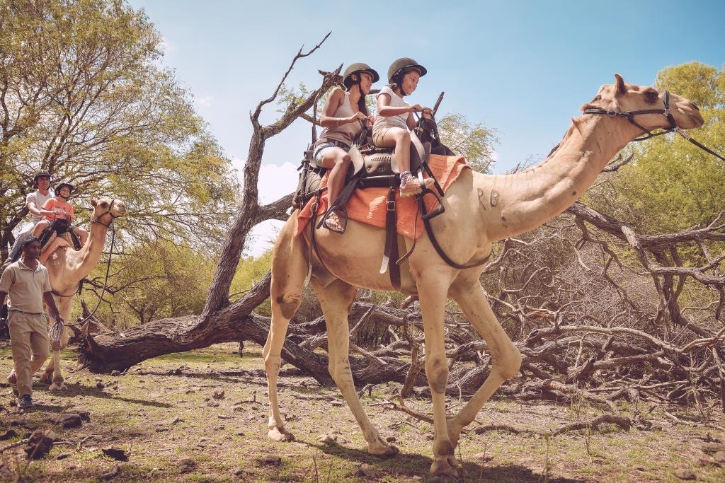 شتر سواری در پارک کازلا