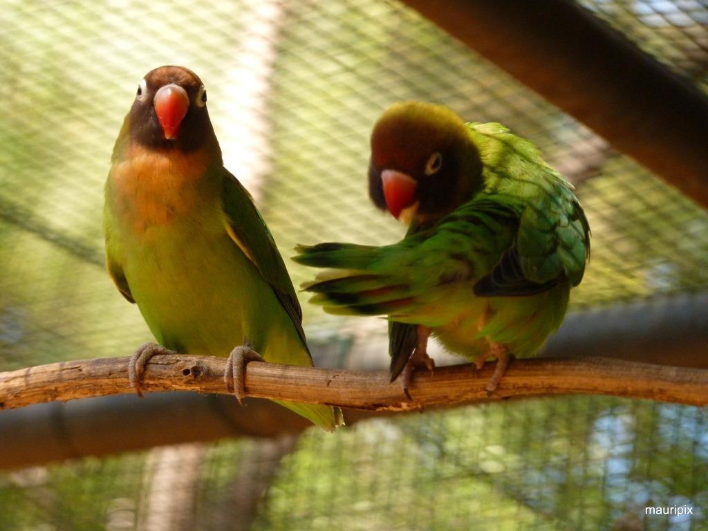 باغ پرندگان پارک کازلا موریس