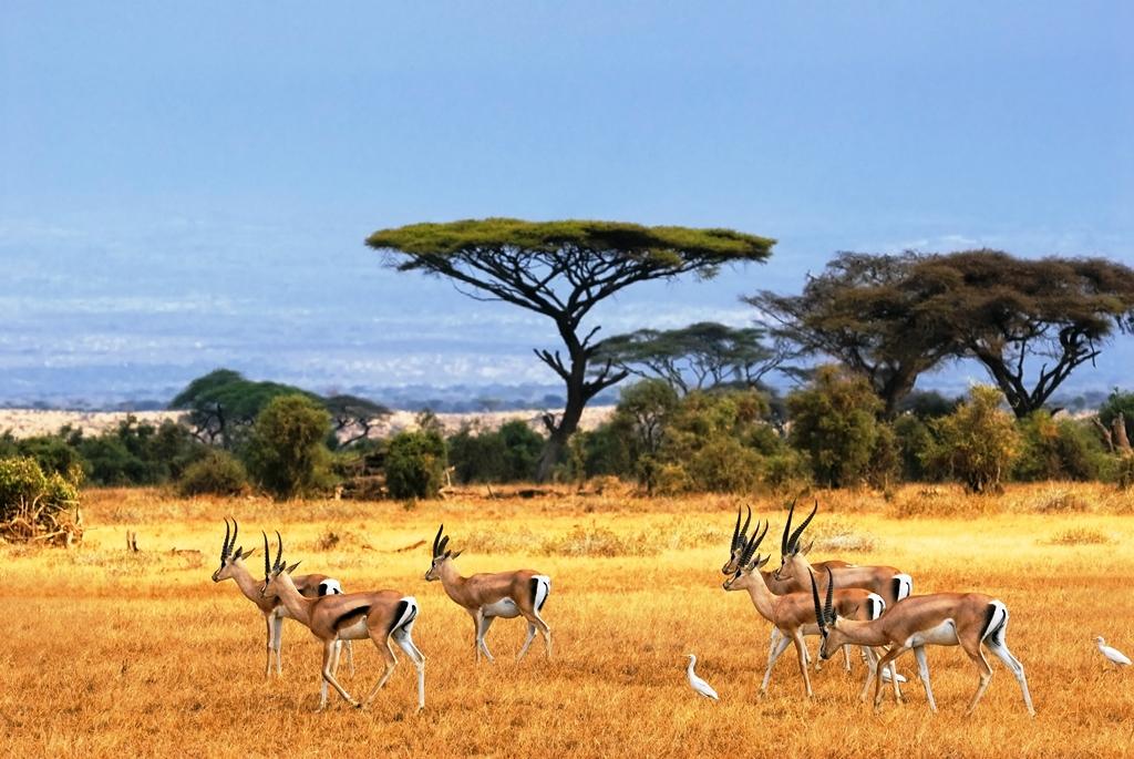 پارک جنگلی کروگر آفریقای جنوبی
