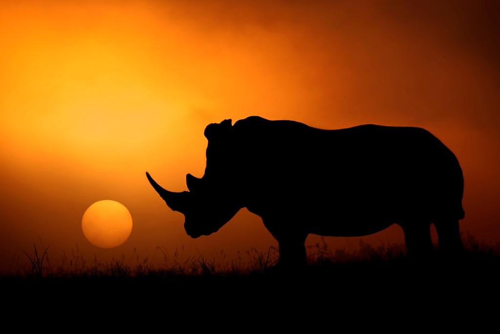پارک حیات وحش کروگر آفریقای جنوبی