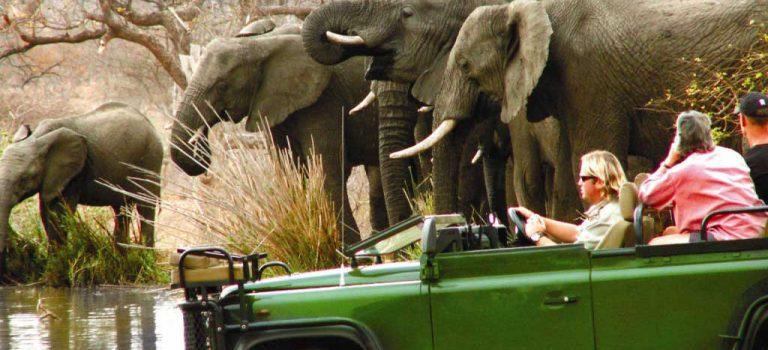 پارک ملّی کروگر آفریقای جنوبی | Kruger National Park