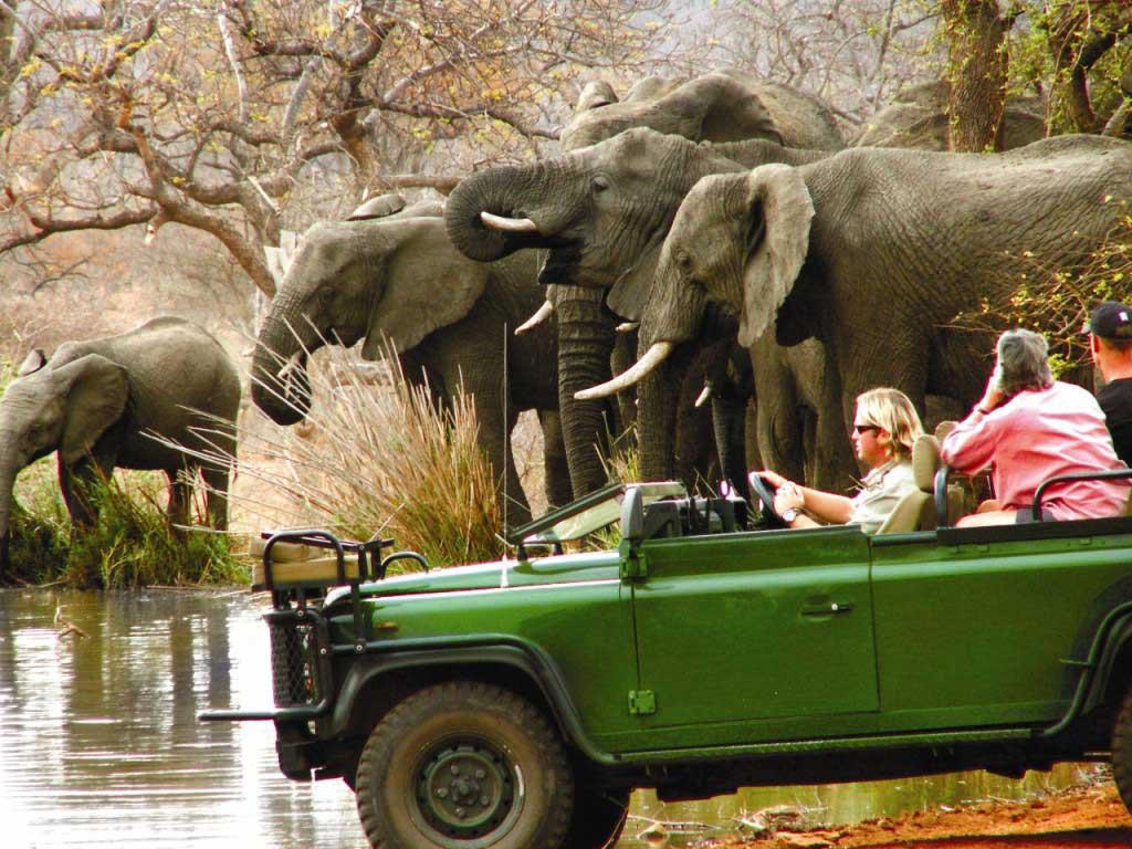 Photo of پارک ملّی کروگر آفریقای جنوبی | Kruger National Park
