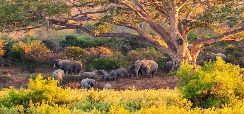 پارک ملّی کروگر آفریقای جنوبی