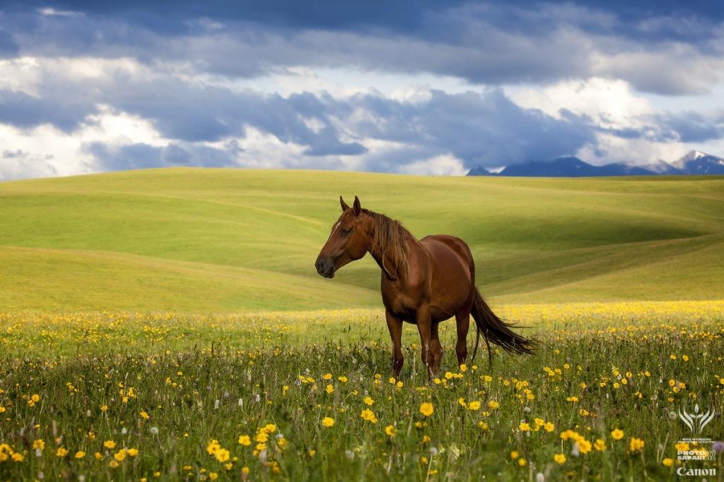 تور قزاقستان نوروز ۹۶