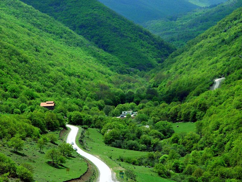 جنگل های ارسیاران