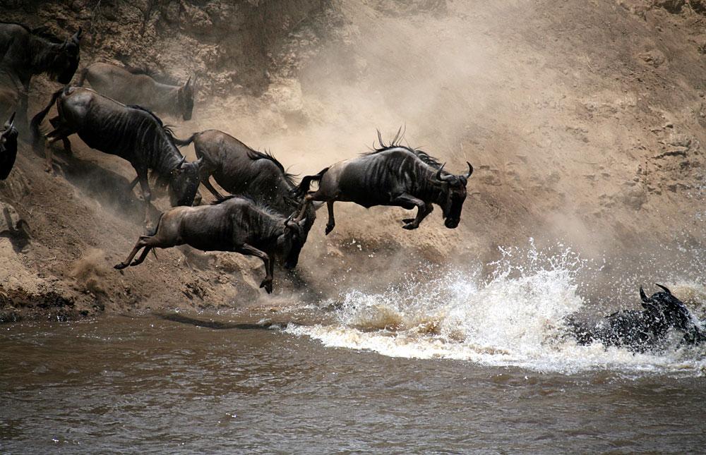 تور حیات وحش کنیا