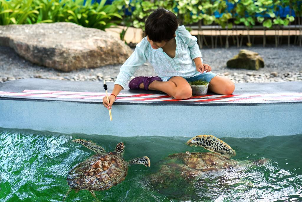 پناهگاه لاک پشت های دریایی هتل ماریوت
