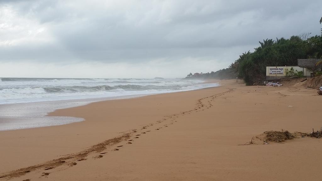ساحل بروولا