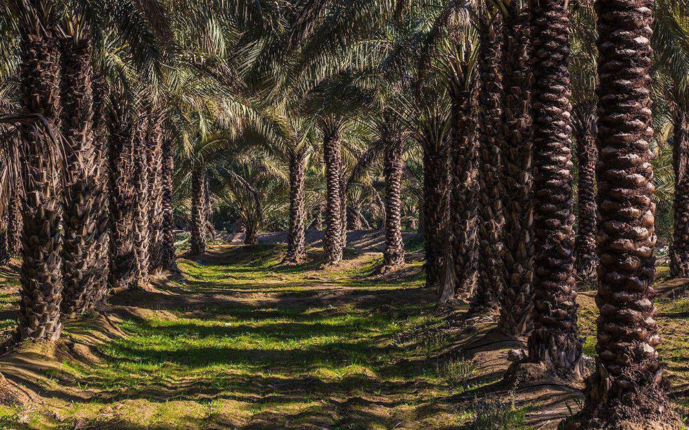 Photo of دیدنی های بوشهر | جاذبه های بوشهر | bushehr attraction