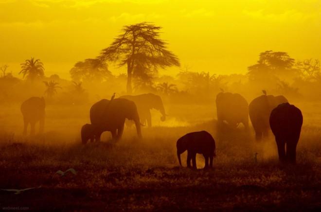مرکز نگهداری فیل های پیناوالا