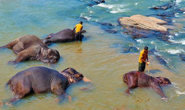 حمام کردن فیل های پیناوالا