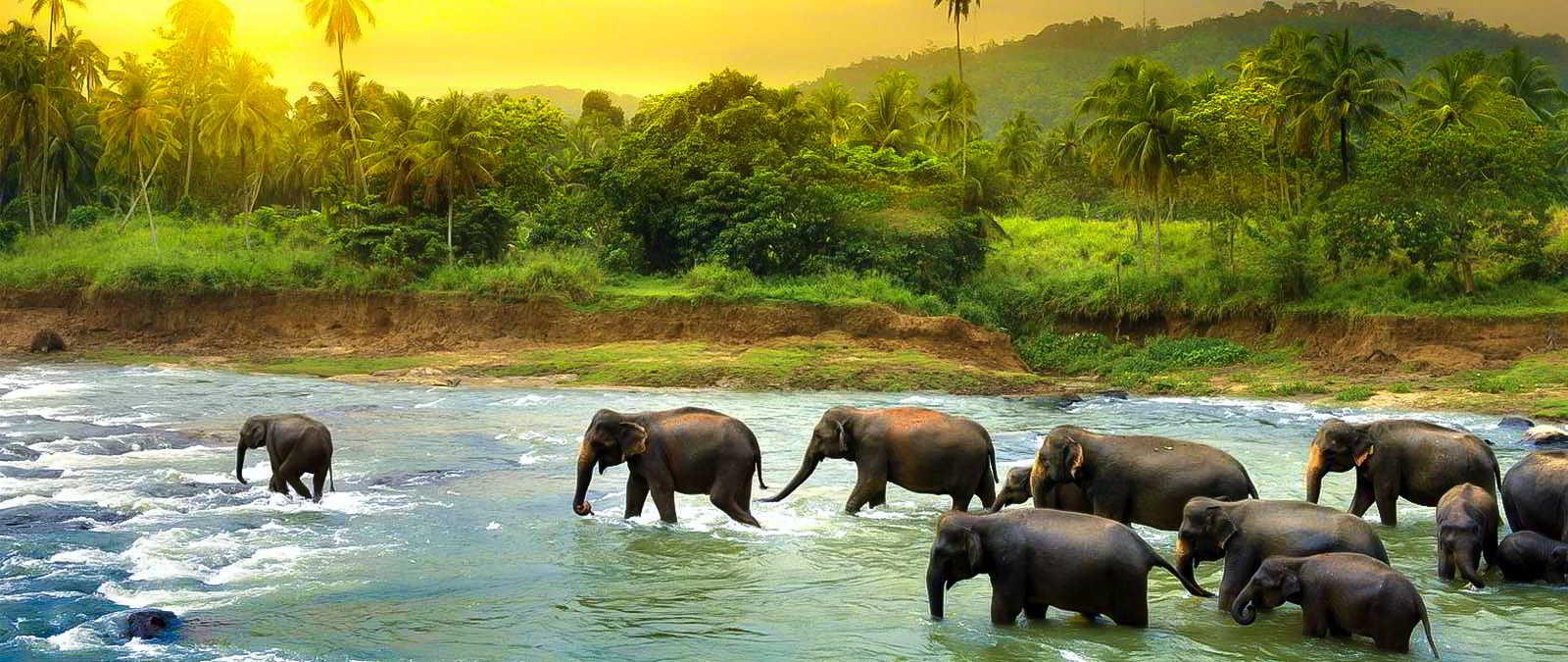 Photo of مرکز نگهداری فیل های پیناوالا | Pinnawala Elephant Orphanage