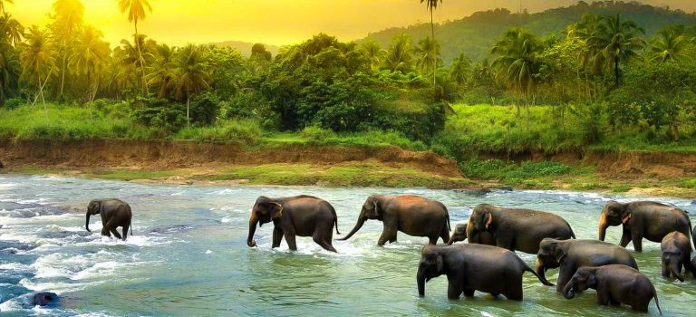 مرکز نگهداری فیل های پیناوالا | Pinnawala Elephant Orphanage