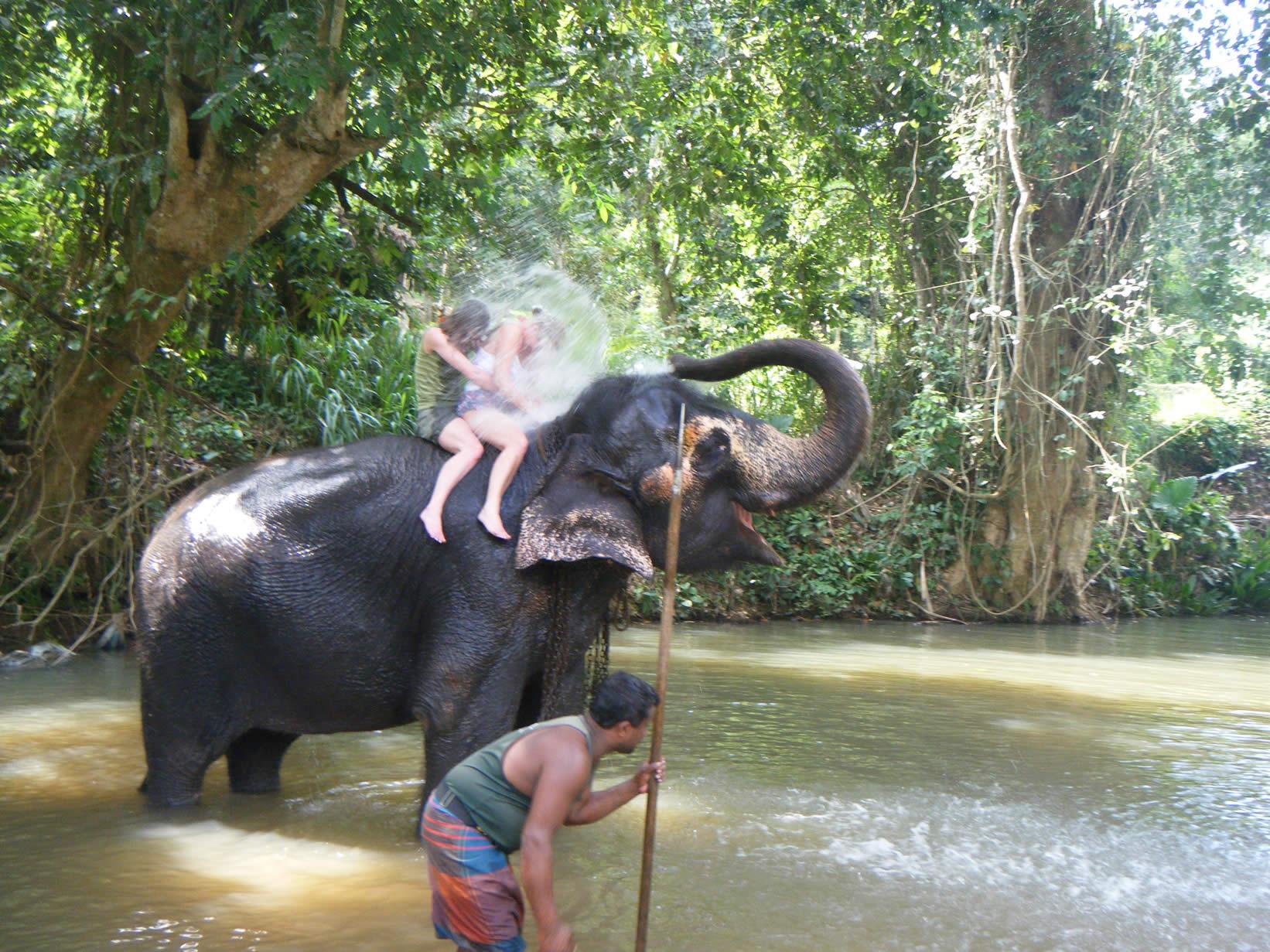 فیل سواری در پیناوالا