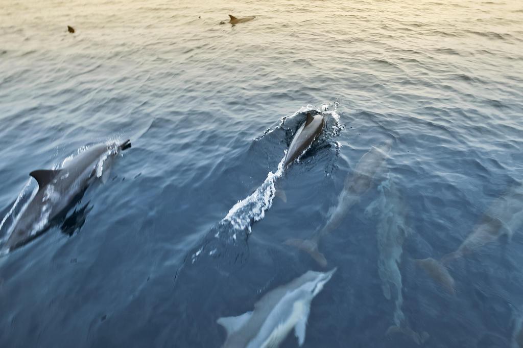 دلفین ها هتل هالیدی آیلند