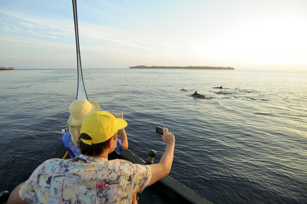 مشاهده دلفین ها هتل هالیدی آیلند