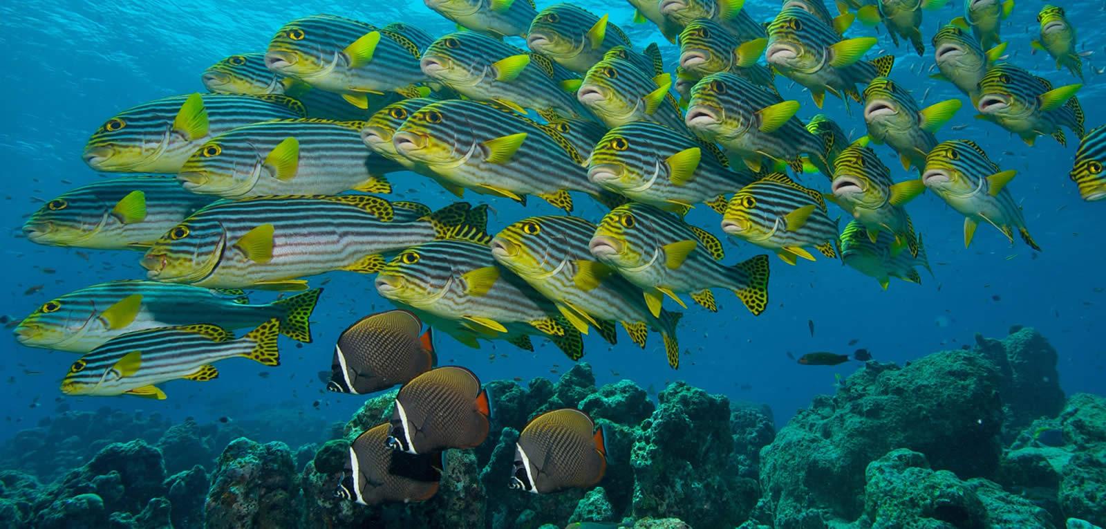 دنیای زیر آب مالدیو