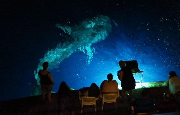 اسنورکلینگ شبانه از تفریحات مالدیو