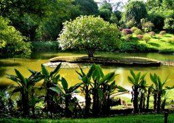 باغ گیاه شناسی کندی سریلانکا