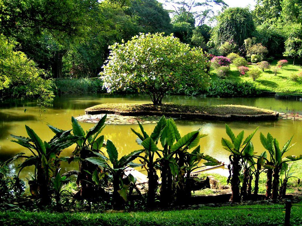 Photo of باغ گیاه شناسی کندی سریلانکا | باغ گیاهشناسی پرادنیا کندی