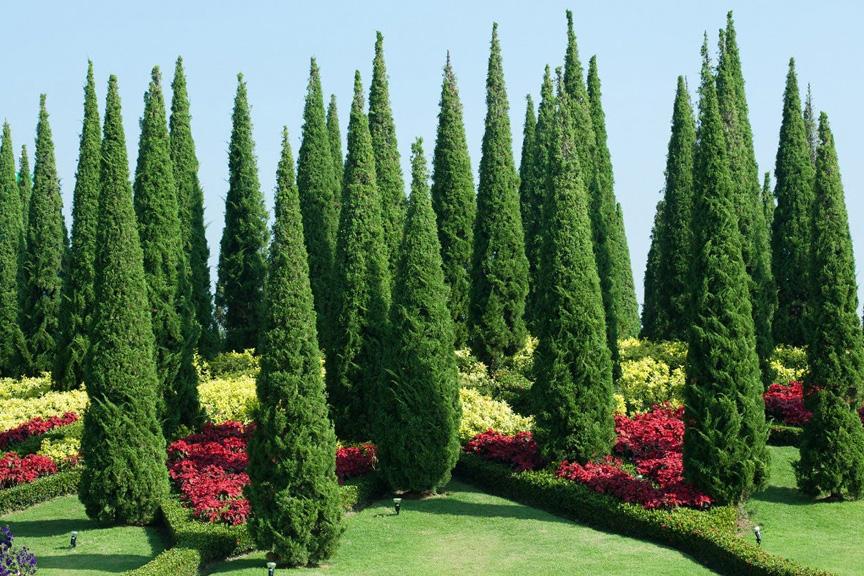 باغ گیاهشناسی کندی سریلانکا