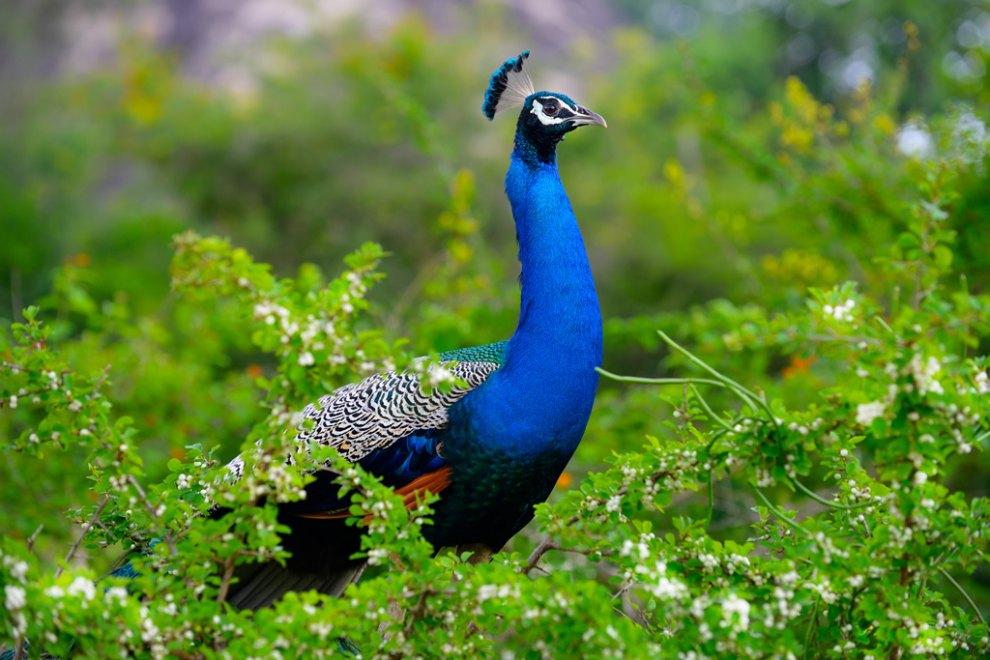 طبیعت بکر سریلانکا