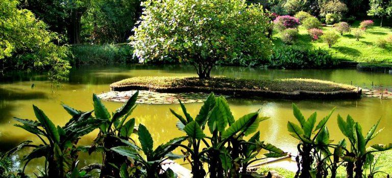 باغ گیاه شناسی کندی سریلانکا   باغ گیاهشناسی پرادنیا کندی