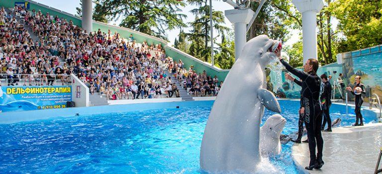 دلفیناریوم پارک ریوییرا سوچی | Riviera Dolphinarium Sochi