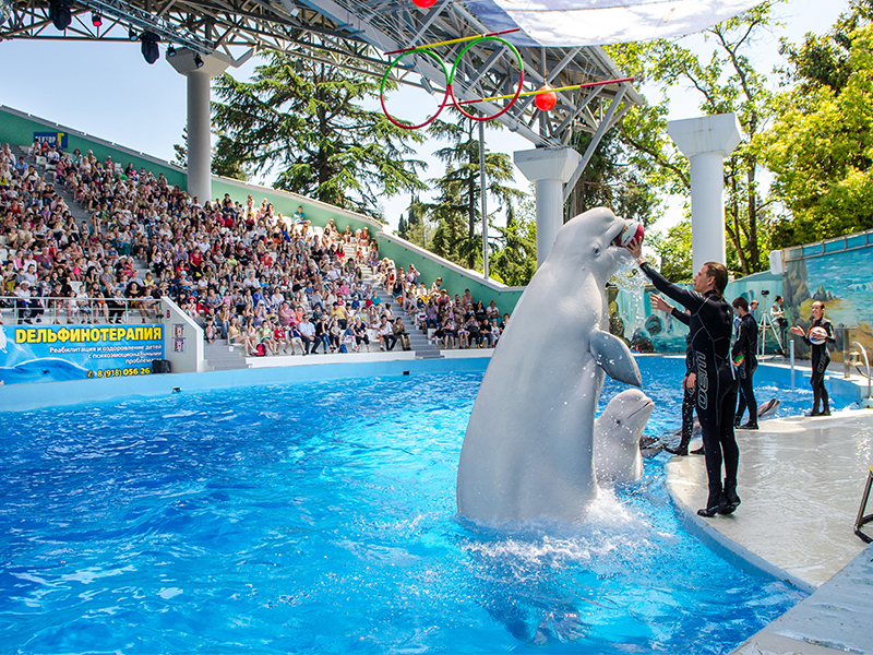 Photo of دلفیناریوم پارک ریوییرا سوچی | Riviera Dolphinarium Sochi