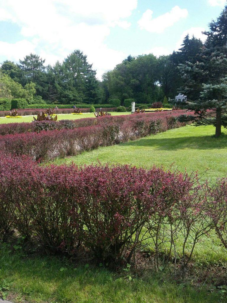 باغ گیاه شناسی مینسک