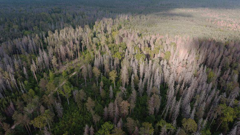 جنگل Bialoweiza بلاروس
