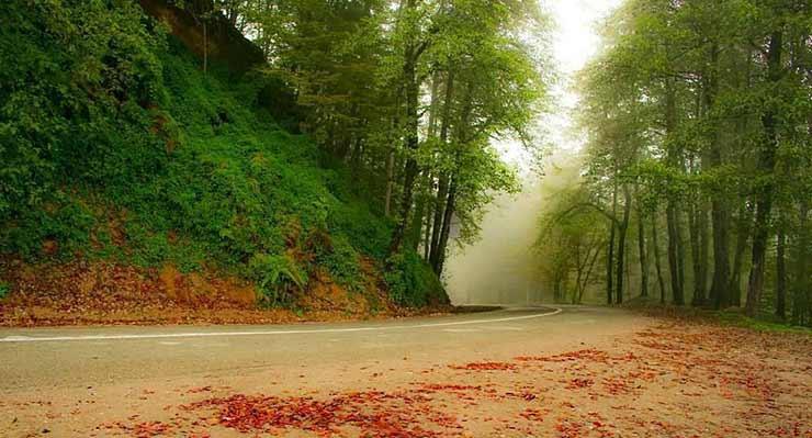 Photo of جنگل دالخانی و ییلاق جنت رودبار | دیدنی های رامسر